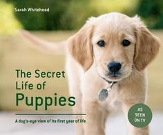 The secret life of puppies press sampler What a beautiful book!  The Secret Life of Puppies - A dog's-eye view of its first year of life  by Sarah Whitehead As seen on Channel 5 - new Book out now!  RRP £14.99 Published by Pavilion Books
