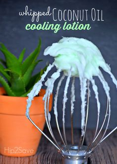 Cool down with this DIY Cooling Skin Lotion with Whipped Coconut Oil, Aloe Vera, Lavender & Peppermint! ♡ purasentials.com ♡ essential oils with love