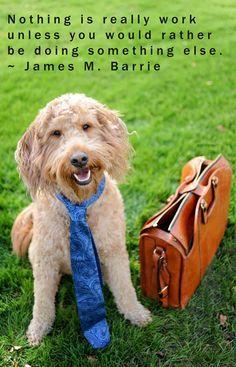 pinterest dog photography - Google Search