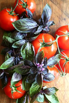 Tomatos and Purple Basil
