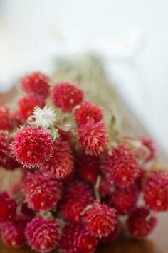 Cherry red globe amaranth cherry red by TheBlaithinBlairShop