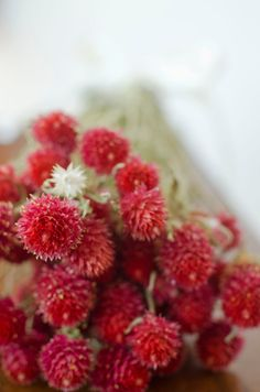 Cherry red globe amaranth cherry red by TheBlaithinBlairShop
