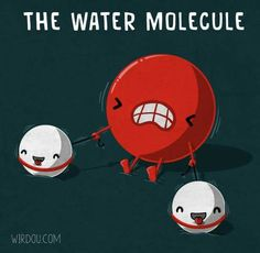 biology - - biology - The Water Molecule Poster Image wirdou the-water-molecule mens t-shirt Explore Atoms and Molecules! (eBook) The Water Molecule Egyptronic! by Elise Nishiyama Science Chemistry, Science Humor, Physical Science, Science Fair, Science Lessons, Science Education, Science Activities, Chemistry Classroom, Chemistry Humor