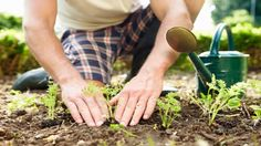 Spring gardening do's and don'ts
