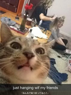 cat-selfshot-18.jpg