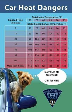 What to know: Summer safety tips with your dog Dog Care Tips, Pet Care, Dog Loss Quotes, Summer Safety Tips, Inside Car, Loss Of Dog, Elapsed Time, Dog Safety, State Police