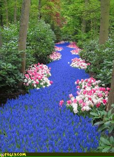 River Of Flowers Beautiful Nature