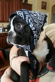 Boston babushka <3