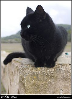 Black cat with pretty green eyes...