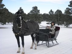 now to get a sleigh and teach silken how to pull it...