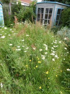 Our Wildflower Meadow | Jeremy Bartlett's LET IT GROW blog
