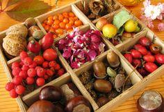 Wenn Sie die Sammel-Leidenschaft gepackt hat: Diese Köstlichkeiten können Sie mit etwas Glück und Kennerblick beim Herbstspaziergang ernten.
