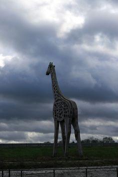 Giraffe, A37, Klazienaveen, Drenthe.