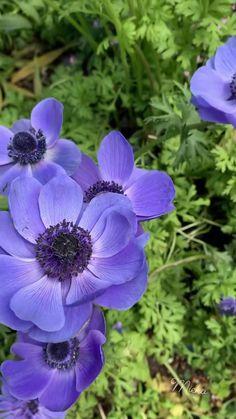 Purple flowers 💐💐😍🥰😍