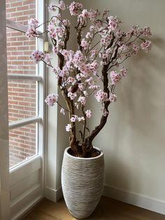 Wist jij dat de bloesembomen ook verstuurd worden? Deze en nog veel meer bloesembomen zijn te bestellen via de webshop op www.annefleurs-shop.nl