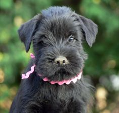 Google Image Result for http://blackschnauzer.files.wordpress.com/2010/02/iska-dirt-is-good.jpg