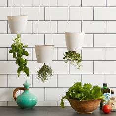 Gravity With this Upside Down Planter Surprise guests with a DIY planter you can hang from the ceiling.Surprise guests with a DIY planter you can hang from the ceiling. Hanging Herb Gardens, Hanging Plants Outdoor, Hanging Herbs, Diy Hanging Planter, Hanging Flower Pots, Hanging Baskets, Planter Ideas, Hydroponic Gardening, Organic Gardening