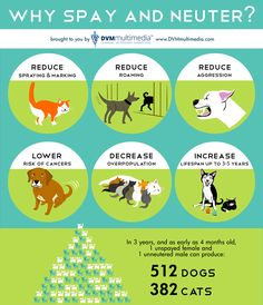 Be a responsible pet owner by saying or neutering your beloved pets!