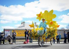 The beautiful Kyneton Daffodil and Arts Festival.  Annual event celebrating the start of Spring.  Kyneton Town Centre, Kyneton, Victoria AU