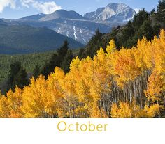 Aspen Gold in October, Rocky Mountain National Park, CO.....by james frank