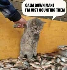 CALM DOWN MAN !