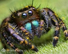 Here's a good science article for kids to know more fun facts about spiders. Should we really be scared of spiders? Are spiders harmful and poisonous? What do spiders eat? How are they helping humans? Spider Facts For Kids, Science Articles For Kids, Scared Of Spiders, Spider Pictures, Jumping Spider, Most Beautiful Animals, Macro Photography, More Fun, Pet Supplies