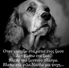 Dog Quotes Love, Best Quotes, Life Quotes, Kindness To Animals, My Best Friend, Best Friends, Greek Words, Happy Birthday Greetings, Greek Quotes