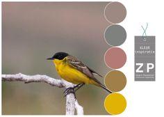 Kleurinspiratie | Colors
