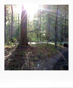 Was für eine tolle Abendstimmung im Wald. Digital Photography, Plants, Pictures, Woodland Forest, Amazing, Plant, Planets