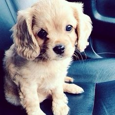 This puppy is so cute.