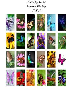 Lots of beautiful Butterflies!  Art Digital Collage Sheet Domino Tile Size  by MelancholyMind at