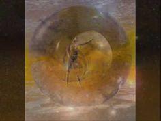 L'Evoluzione dell'Uomo Spirituale - 3^ parte di 6 - da La Vita Divina di Sri Aurobindo - YouTube