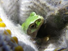 !I love frogs :);)