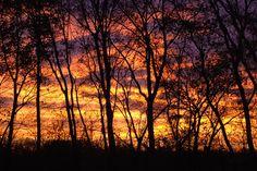 Trees, Sunrise, Landscape, Nature, Sunset, Forest (scheduled via http://www.tailwindapp.com?utm_source=pinterest&utm_medium=twpin&utm_content=post128784083&utm_campaign=scheduler_attribution)