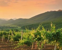 Vineyard, Monat, Outdoor, Eye Brows, France, Thought Bubbles, Summer, Autumn, Outdoors