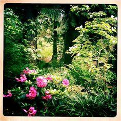 Mid Spring Shade Garden