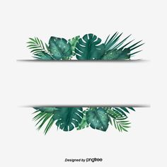 Leaves Wallpaper Iphone, Flower Background Wallpaper, Plant Background, Framed Wallpaper, Flower Backgrounds, Palm Leaf Wallpaper, Green Leaf Background, Tropical Wallpaper, Tropical Frames
