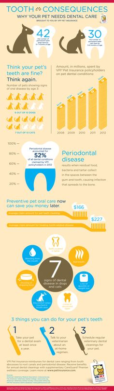February is Pet Dental Health Month. Check out the infographic on why it's important to keep your pet's pearly whites healthy!