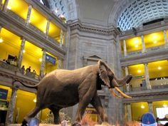National Museum of Natural History | Visiting Washington DC with Kids via http://www.familyvacationplanning.net