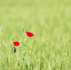 #florafix #favv_flowers #flowerslovers #ip_blossoms #igersjp #my_daily_flower #splendid_flowers #loves_garden #floral_secrets  #topfleur #paradiseofpetals #bns_garden #princely_shotz #naturebreathphotos #fotoartegram #inspiring_shot #garden_explorers #florastylesgf #9Vaga9 #9Flower9 #Great_Captures_Flowers #flowers_earth #bokeh_kings #bns_japan #team_jp_flower #ig_discover_petal #flowers2sky #bns_macro #alalamiya_macro #airy_pics…