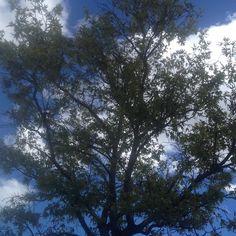 Afternoon light #tree #sky #cloud