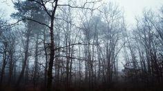Bois de saint helene gironde matin brumeux