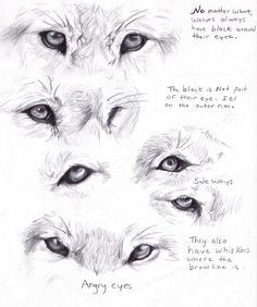 Wolf Drawings | wolf eyes by adothwolf traditional art drawings animals 2011 2013 ...