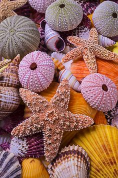 Stars among the seashells, is a wonderful collection of starfish and sea shells all piled together. A sea life still life. Summer Wallpaper, Colorful Wallpaper, Nature Wallpaper, Wallpaper Backgrounds, Iphone Wallpaper, Seashell Art, Seashell Crafts, Starfish, Beautiful Sea Creatures
