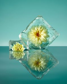 <p>'Freezing Flowers' is a new project by a Spanish photographer, Paloma Rincon. These gorgeous still life images shows frozen flowers displayed in blocks of ice. Rincon took inspiration from the art history, where flora has often been represented. The series is Rincon's own, contemporary form to build nature's new visual language, where textures and shapes of…</p>