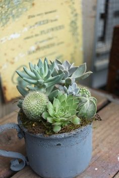 charming cactus & suculents