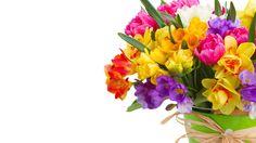 Daffodils and Freesias Bouquet HD Wallpaper Freesia Bouquet, Daffodil Bouquet, Christmas Frames, Daffodils, Cover Photos, Hd Wallpaper, Wallpapers, Floral Wreath, Wreaths