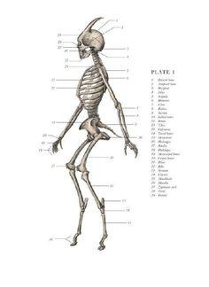 Satyr anatomy