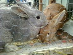 My bunny could be twinsies with the one on the right, except he's about twice as big... :o)