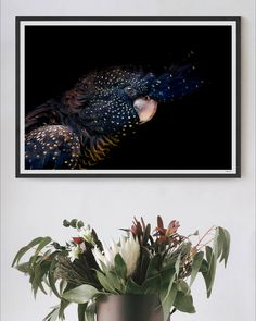 As much as we might try, you simply can't art direct animals. Instead, we have to observe and be ready to capture the moments as they unfold. We were lucky enough to have such a moment as Indi briefly paused, looked down the lens and extended her crest revealing her intricate patterning and feathers.   #blackcockatoo #print #florals #art #homedecor #artprint #photography #bird #artwork #australian #australiana #protea #home #myhome #nursery #wallart #framedart Bird Artwork, Black Artwork, Wall Art Prints, Fine Art Prints, Framed Prints, Highland Cow Art, Paper Plants, Scandinavian Art, Horse Print
